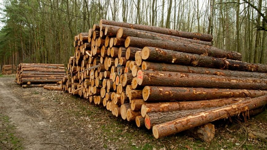 Biomasaker môžeme zastaviť, slovenské lesy dostali šancu, tvrdí Budaj